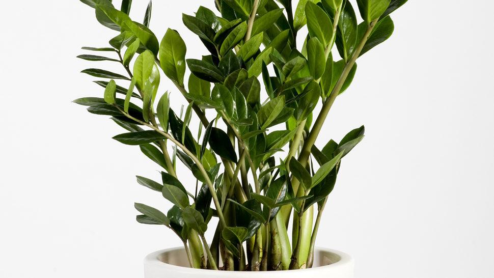 Gotovo neuništiva biljka