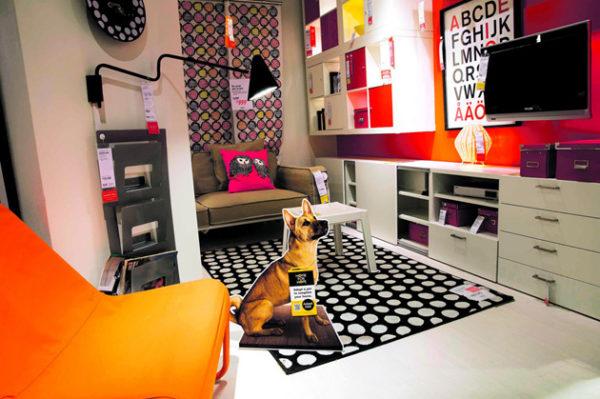 Udomite psića iz azila Dumovec u prostoru IKEE