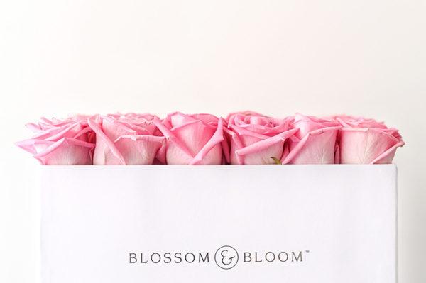 Otvorena prva flower box galerija u Zagrebu