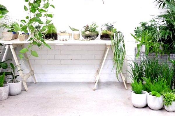 Jeste li znali da u Botaničkom vrtu možete kupiti biljku?
