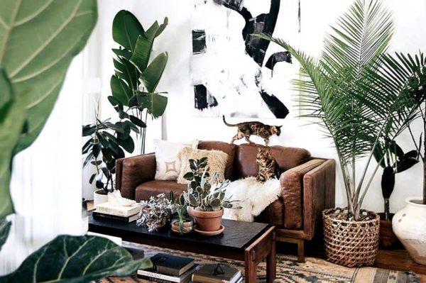 Kako su biljke u domu opet postale poželjne