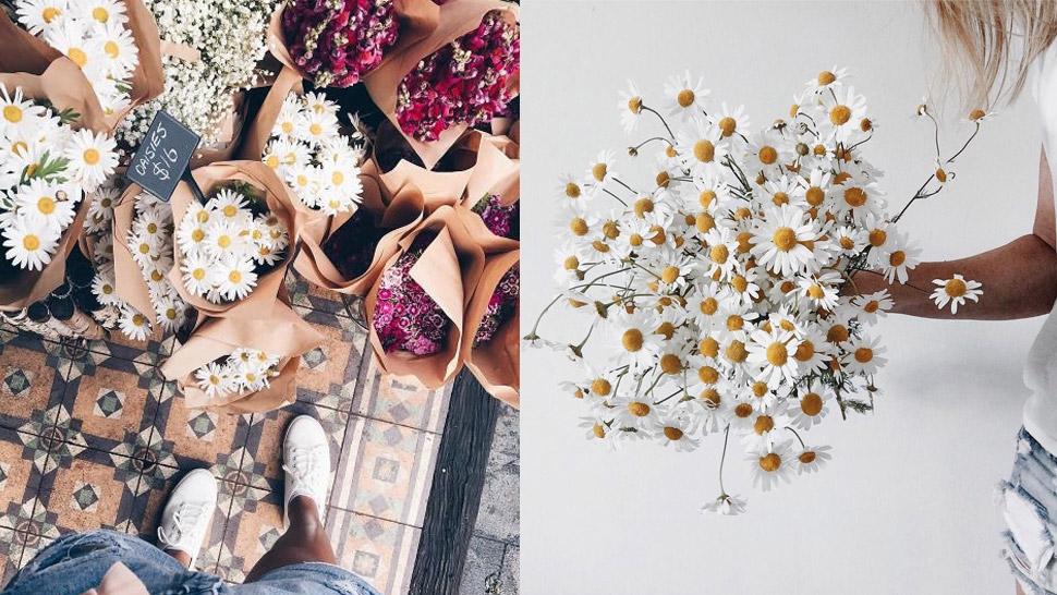 poljsko cvijeće