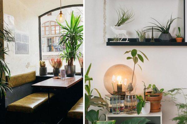 Hrvatski Instagram profil za koji će se zakačiti svi ljubitelji biljaka