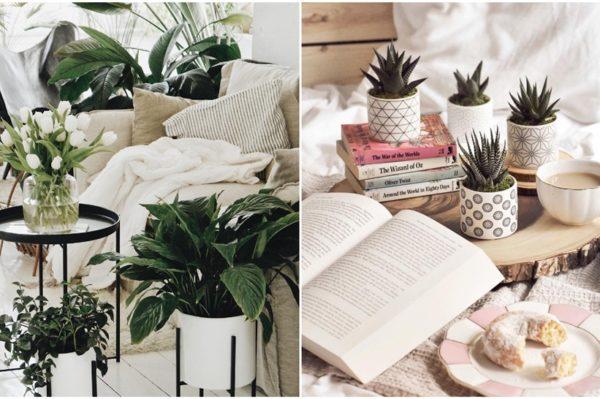 Sobne biljke koje će uljepšati dom i preživjeti hladne mjesece
