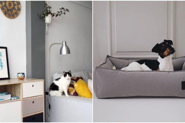 Praktična rješenja za kućne ljubimce u modernom domu