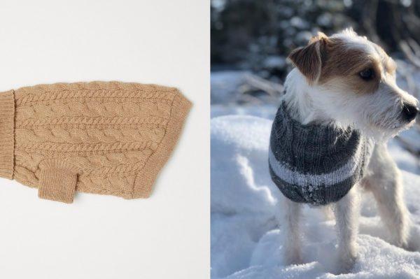 Poznati modni brendovi koji dizajniraju pulovere za naše četveronožne ljubimce