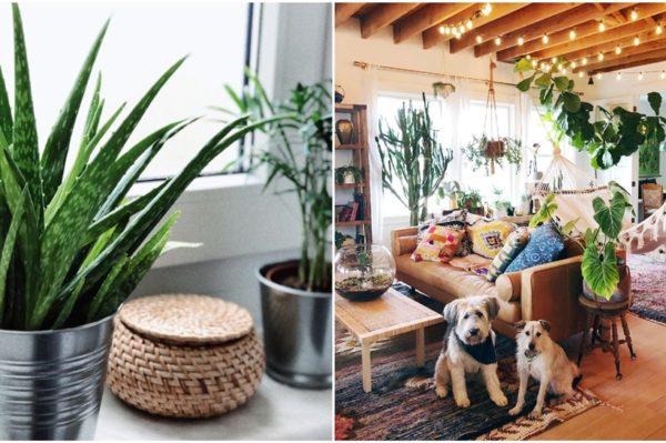 Popularno cvijeće i sobne biljke koje su opasne za vašeg mezimca