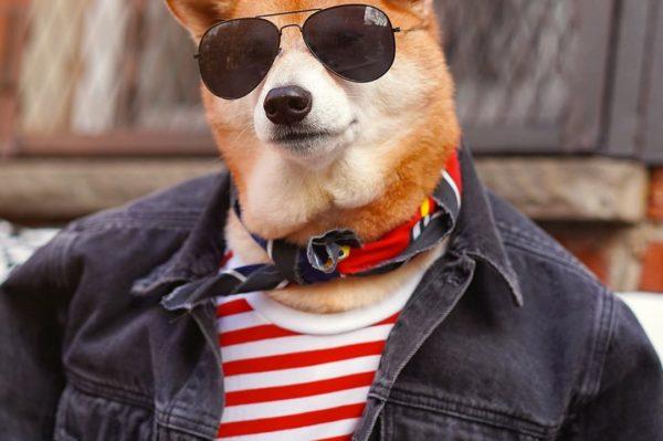 Bodhi je najstylish pas Instagrama koji će vas odmah osvojiti