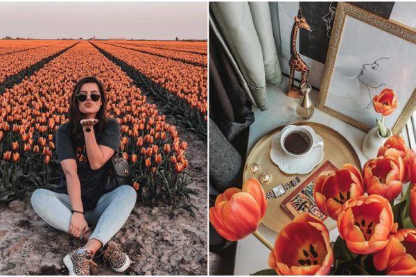 Ništa ne kaže proljeće više od tulipana