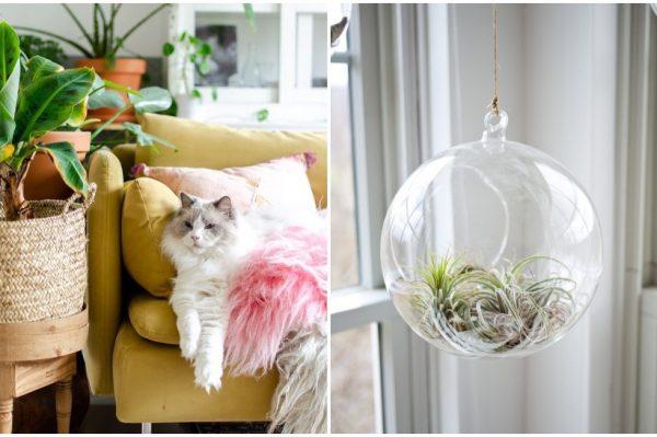 Kućne biljke koje uljepšavaju prostor i sigurne su za vaše ljubimce