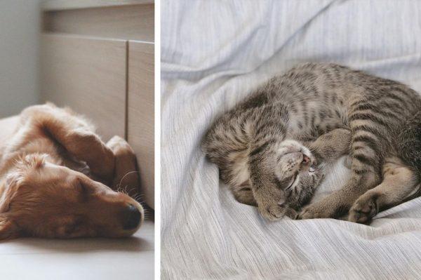 Znate li kako spavaju i o čemu sanjaju kućni ljubimci?