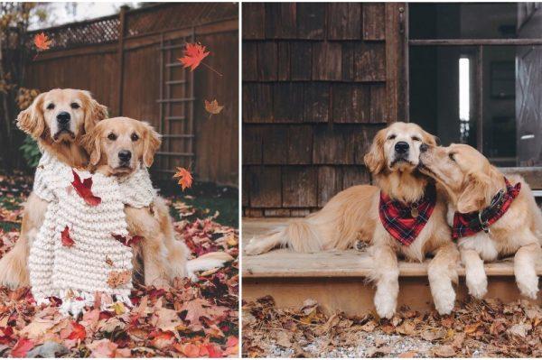 Journal Pets: Najljepši pseći Insta profil