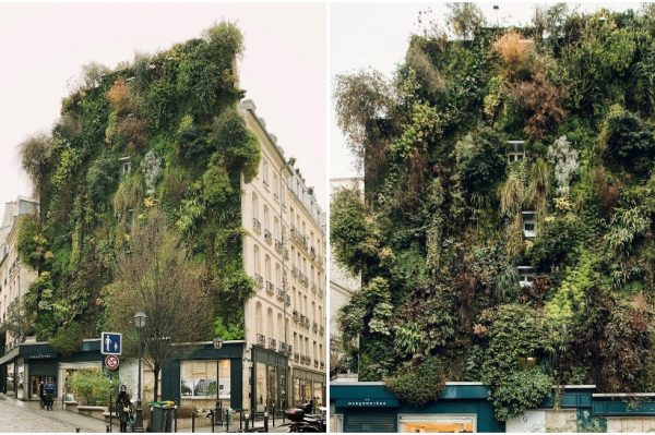 Prekrasni vertikalni vrtovi Patricka Blanca osvojili su Instagram