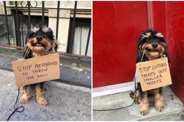 Journal Pets: Nakon Instagram profila Dude With Sign, zvijezda je postao i Dog With Sign