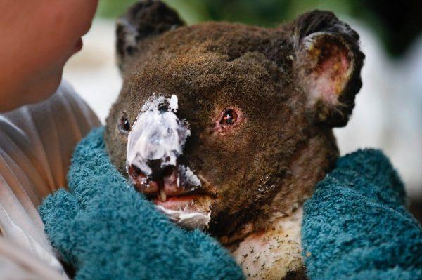 Revolut u suradnji s Crvenim križem i WWF-om za pomoć Australiji