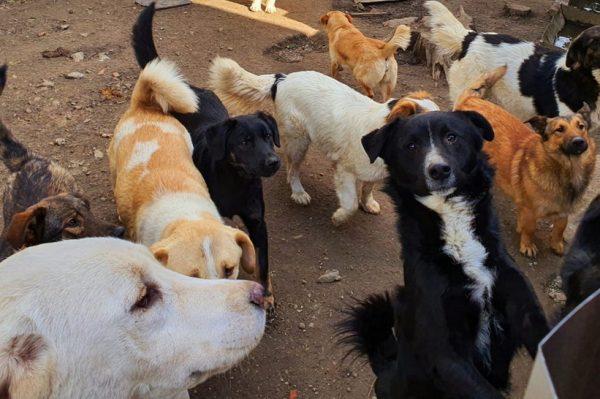Journal Pets: Domaćim udrugama s napuštenim psima i mačkama potrebna je pomoć