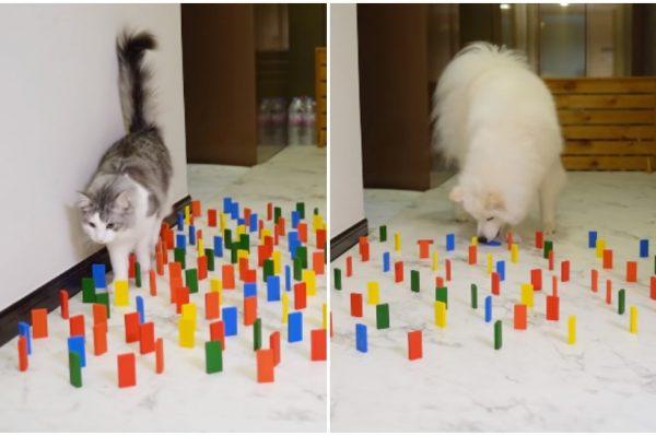 Journal Pets: Ovaj viralni izazov pokazuje koliko su mačke i psi uistinu različiti