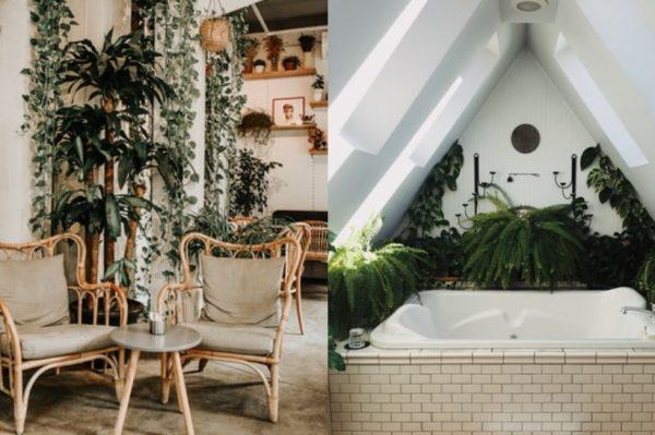 Uz ovih nekoliko savjeta uzgojite paprat i pretvorite svoj dom u zelenu oazu