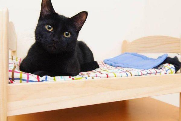 Journal Pets: Ovi mini Ikea krevetići za lutke savršena su oaza za mačke