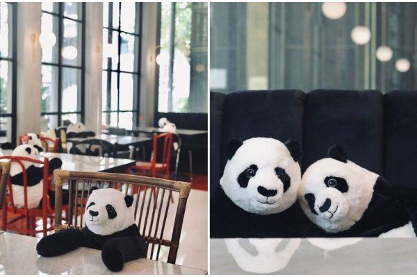 Journal Pets: U ovom restoranu možete jesti s pandama kako se ne bi osjećali usamljeno