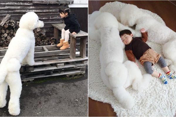 Journal Pets: Ove tri pudlice imaju posebnu vezu s najmanjima u svojoj obitelji
