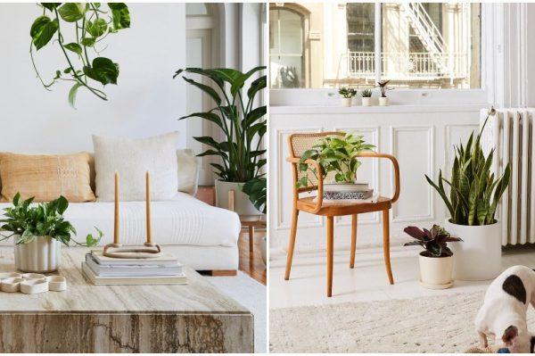 Instagram profili koje ćete obožavati pratiti ako volite biljke
