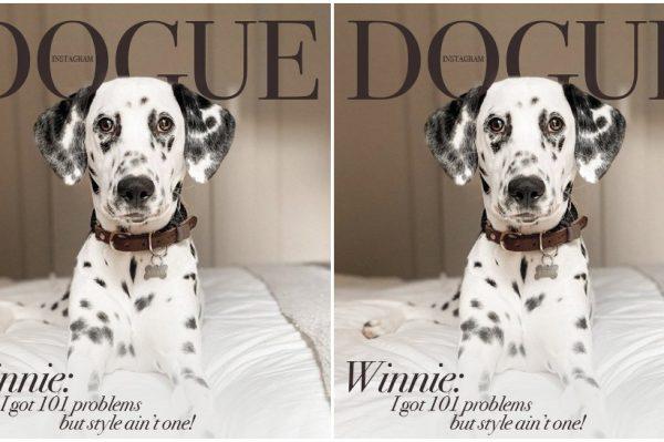 Journal Pets: Kako to izgleda kad psi preuzmu naslovnicu Voguea?