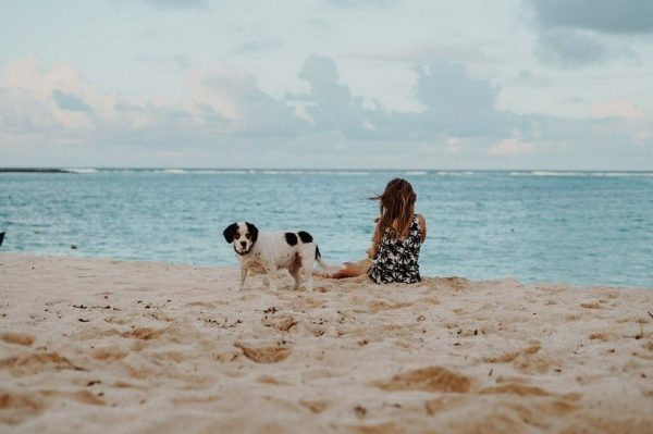 Journal Pets: Must have proizvodi za ponijeti na putovanje s kućnim ljubimcem