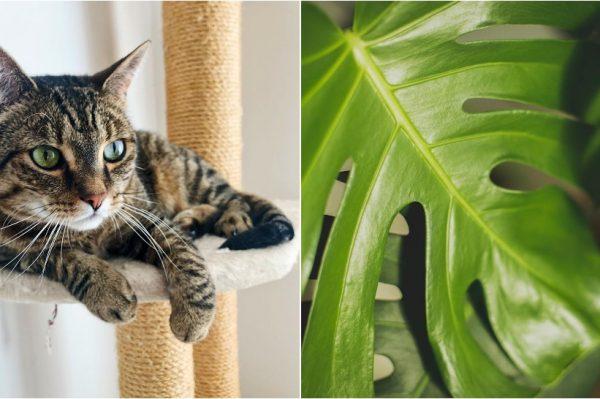 Journal Pets: Insta profili koje ćete obožavati ako volite mačke i biljke