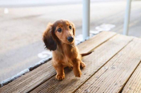 Journal Pets: Mushu je minijaturni psić koji ponedjeljak najradije provodi na suncu