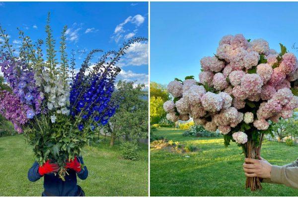 Ovaj domaći OPG ima najljepše cvijeće koje ćete vidjeti na Instagramu