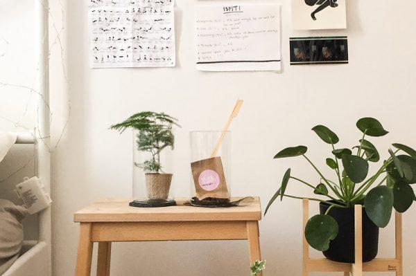 Biljke.plants ima cool DIY set za izradu biljnog terarija