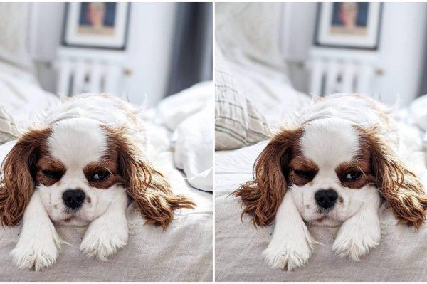 Journal Pets: Cookie je psić koji je strastvena spavalica