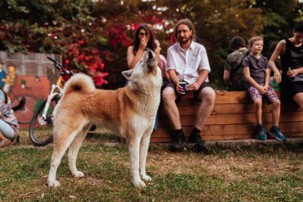 Journal Pets: Dođite na Good Cause glazbeni event koji pomaže teško udomljivim psima