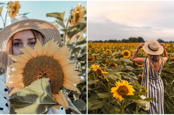 Polja suncokreta koji upravo cvjetaju u Međimurju jedan su od najljepših prizora