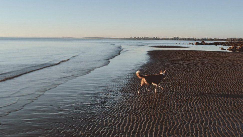 Journal Pets: Hrvatske plaže na koje možete povesti svog ljubimca