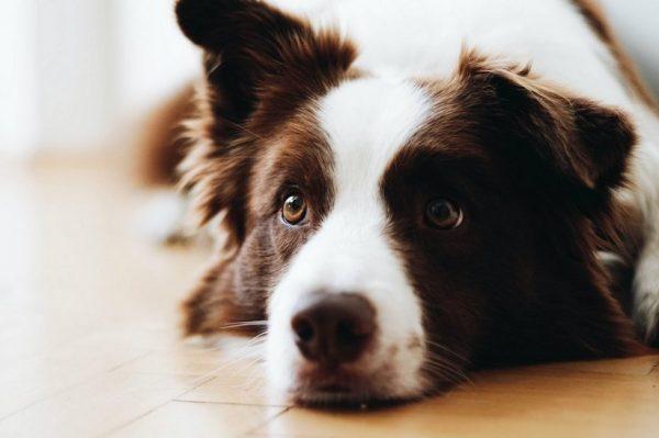 Journal Pets: Psi također mogu patiti od alergija – otkrijte koji su simptomi