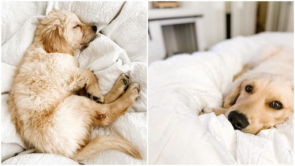 Journal Pets: Pogledajte ovo preslatko štene kako raste iz tjedna u tjedan