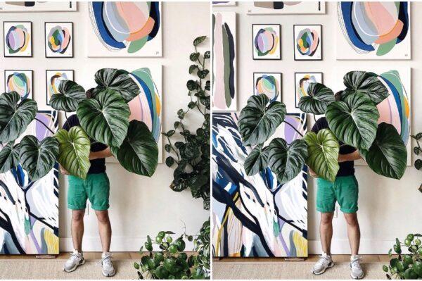 Journal Man: Kućne biljke koje će uspjeti i potpunim početnicima