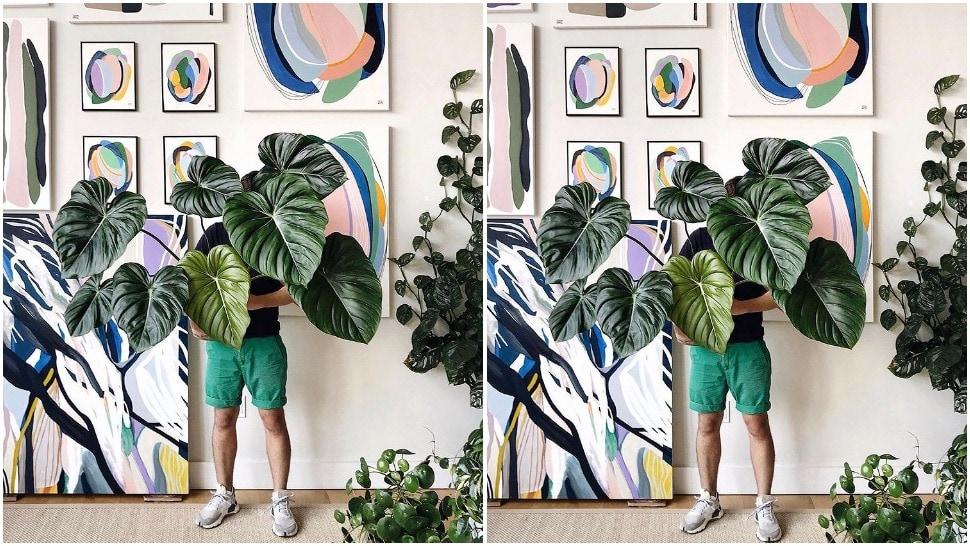 journal man - biljke