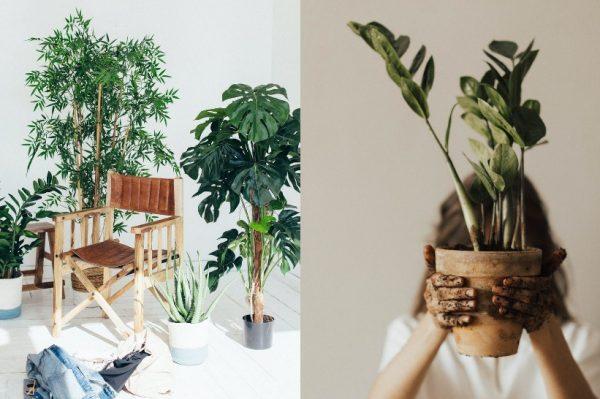 Precool biljke koje ćemo uzgajati ove jeseni