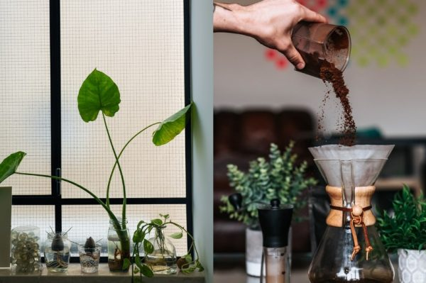 Biljke su vam uvenule dok ste bili na godišnjem? Donosimo savjete za njihov hitni oporavak