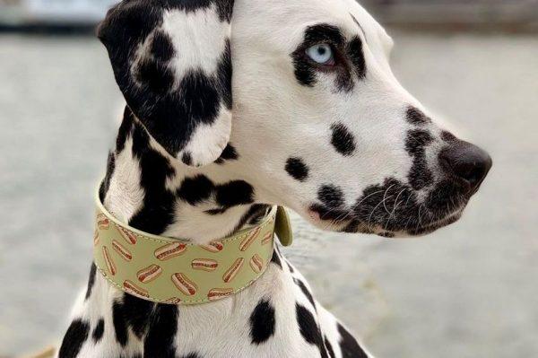 Journal Pets: Fora ogrlice za vaše najdraže mezimce uljepšat će vam svaku šetnju