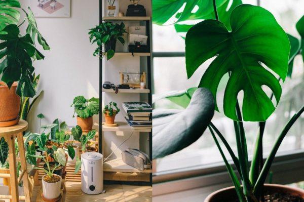 Dođite na jesensku rasprodaju sobnih i vanjskih biljaka
