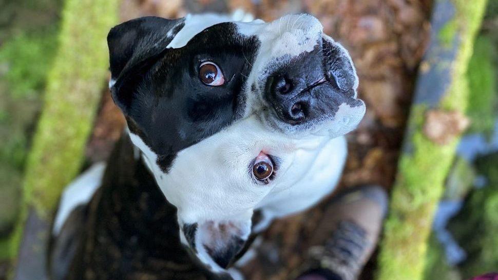 Journal Pets: Doznajte sve detalje o Dog Friendly Croatia u našem prvom psećem intervjuu