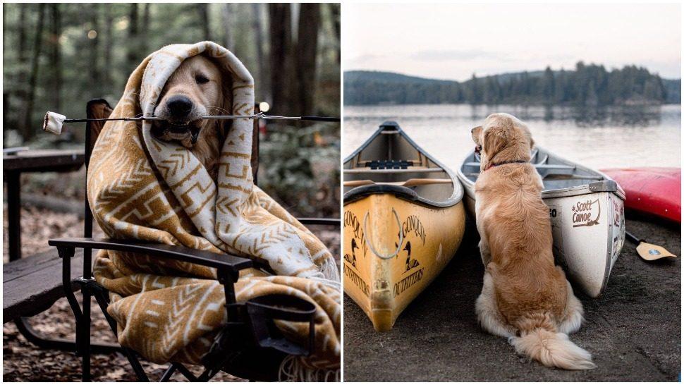 Journal Pets: Easton najviše uživa u kampiranju sa svojim ljudima