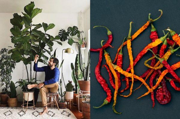 Journal man: Ove biljke obožavaju muškarci, a jednostavne su za održavanje