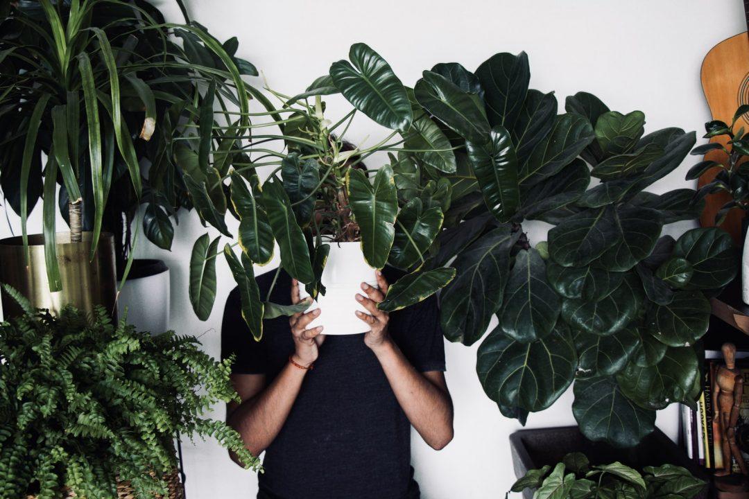 Journal-man-biljke-muškarci