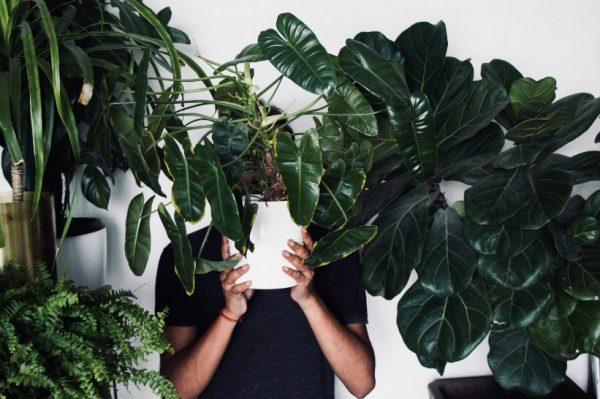 Journal Man: Instagram profili s dečkima koji obožavaju biljke