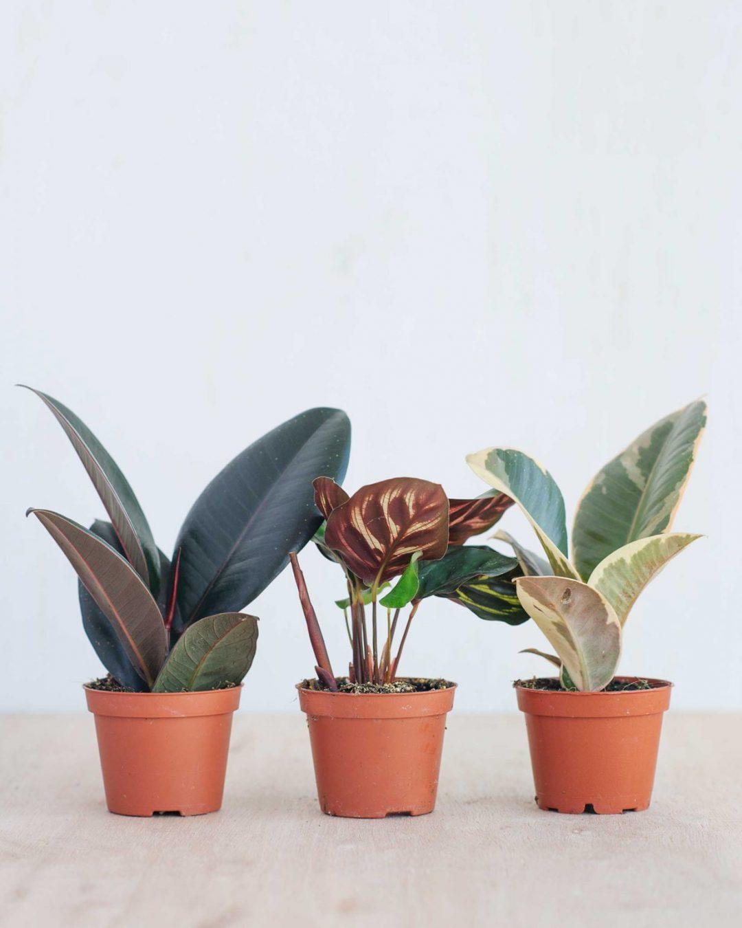 baby-plants-11